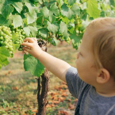 ブドウと子供